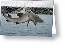 Illegal Gillnet Fishing Academy Bay Greeting Card