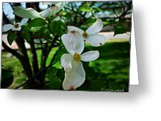 Illinois Capitol Dogwood Greeting Card