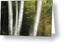 Illuminated Birch Greeting Card