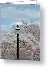 Illuminating Blossoms Greeting Card