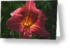 Illumination Greeting Card