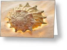 Illumination Series Sea Shells 20 Greeting Card