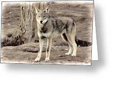 Illusion Of A Wolf Greeting Card