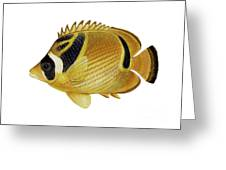 Illustration Of A Raccoon Butterflyfish Greeting Card by Carlyn Iverson