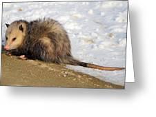 I'm A Possum Greeting Card