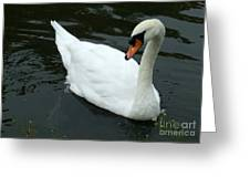 Im Not A Ugly Duck Greeting Card