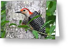 I'm So Handsome - Red Bellied Woodpecker Greeting Card