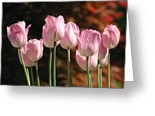 Images Of Spring Greeting Card