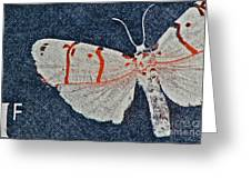 Imago Greeting Card