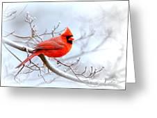 Img 2259-22 - Northern Cardinal Greeting Card