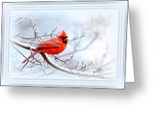 Img 2559-43 Greeting Card
