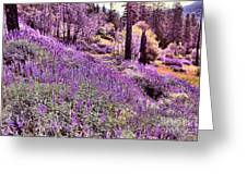 Img 4892_ Purple Lupine_ Yosemite National Park  Greeting Card