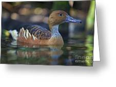 Img_8931 Fulvous Whistling Duck Greeting Card