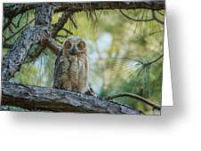 Immature Great Horned Owl Greeting Card