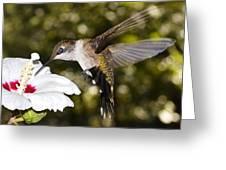 Immature Ruby-throated Hummingbird Greeting Card