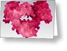 Immunoglobulin E, Antibody Greeting Card