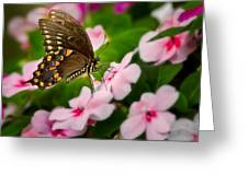 Impatient Swallowtail Greeting Card