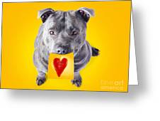 Imploring Staffie With A Sticky Note On His Mouth Greeting Card