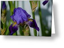 Impossible Imagined Iris Greeting Card