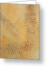 Imprints - Abstract Art By Sharon Cummings Greeting Card