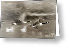 In A Blur Of Feathers Greeting Card