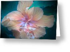 In A Butterfly Garden Greeting Card