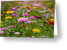 In A Field Of Flowers Greeting Card