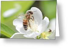 In A Mock Orange Blossom Greeting Card