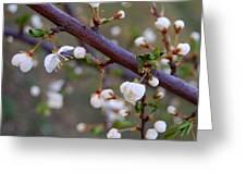 In Bloom IIi Greeting Card