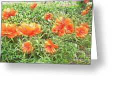 In Flanders Fields The Poppies Grow Greeting Card