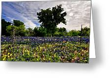 In Full Bloom Greeting Card by Cole Black
