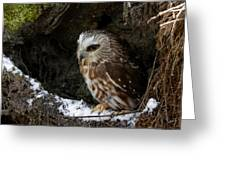 In Hiding Saw Whet Owl In A Hollow Stump Is Part Of The Birds Of Prey Fine Art Raptor Wildlife Photo Greeting Card