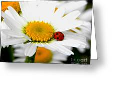 In Love With A Ladybug And A Daisy Greeting Card