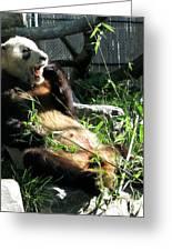 In Need Of More Sleep. Er Shun Giant Panda Series. Toronto Zoo Greeting Card