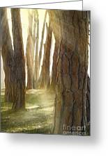 In Pine Forest Greeting Card