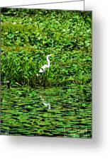 In Plain Sight Greeting Card