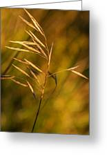 In Praise Of Grass 3 Greeting Card