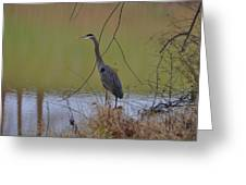 In Search Of Breakfast - C9509c Greeting Card