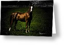 In The Corral 1 - Featured In Comfortable Art And Wildlife Groups Greeting Card