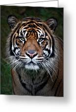 Tiger In Your Face Greeting Card