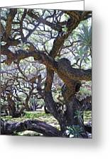 In The Depth Of Enchanting Forest II Greeting Card