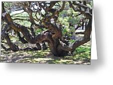 In The Depth Of Enchanting Forest Vi Greeting Card