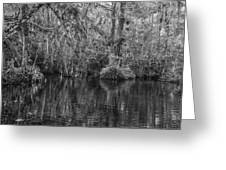 In The Everglades Greeting Card