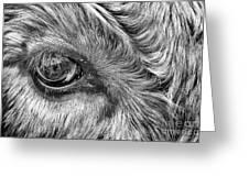 In The Eye Greeting Card