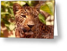 New Orleans In The Eyes Of The Leopard Greeting Card