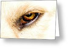 In The Eyes.... Greeting Card