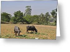 In The Fields Greeting Card