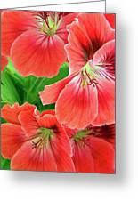In The Garden. Geranium Greeting Card