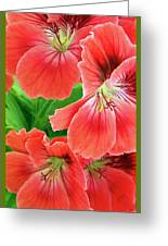 In The Garden. Geranium Greeting Card