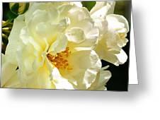 Sunny Rose Garden Greeting Card